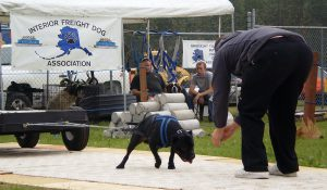 1280px-Dog_weight_pull