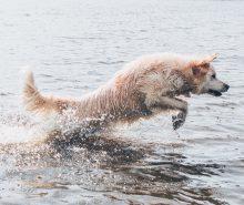 Träning i vattnet